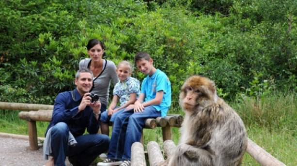 Get up close and personel with the Monkey's at Trentham Monkey Forest