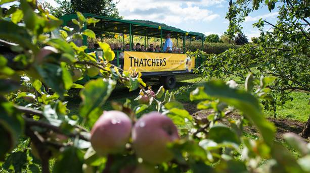Thatchers Cider Open Day in Sandford
