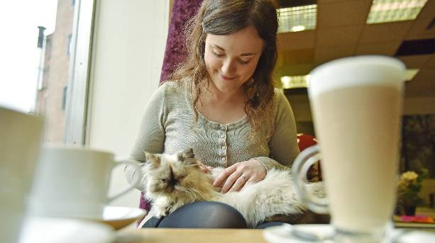 A woman stroking a cat at the Kitty Café