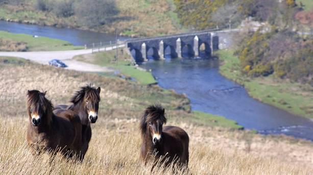 Horses on Exmoor