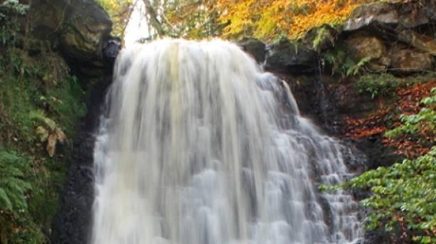 Falling Foss, Sneaton Forest