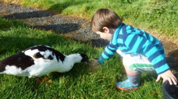 A boy feeding a duck at Pollaughan Cottages, Cornwall