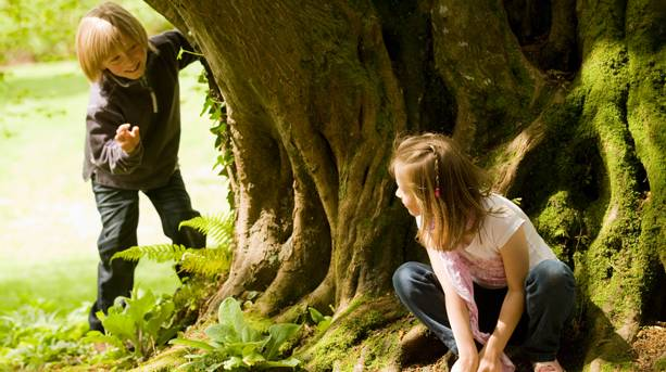 Children climbing tree in Trelissick Gardens