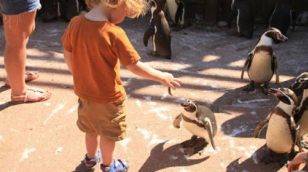 A child feeding a penguin
