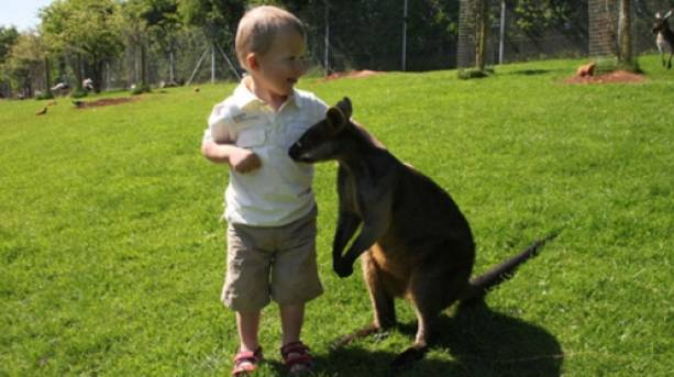 A child petting a wallaby