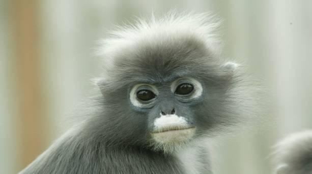 Monkey at Twycross Zoo