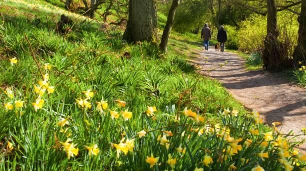 Farndale Daffodil Walk