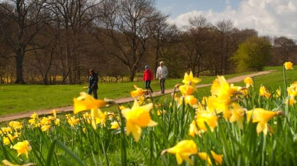Walking amongst the famous Farndale wild daffodils