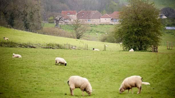View of Folly Farm
