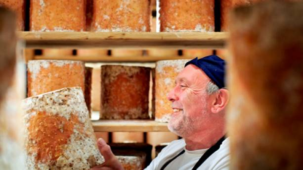A man examining a block of Stichelton Cheese at Welbeck Estate, Nottinghamshire