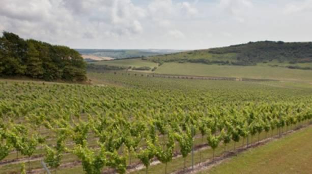 Vineyard at Rathfinney Wine Estate