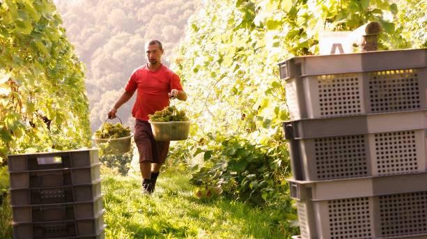 Sharpham Vineyard tour and wine tasting