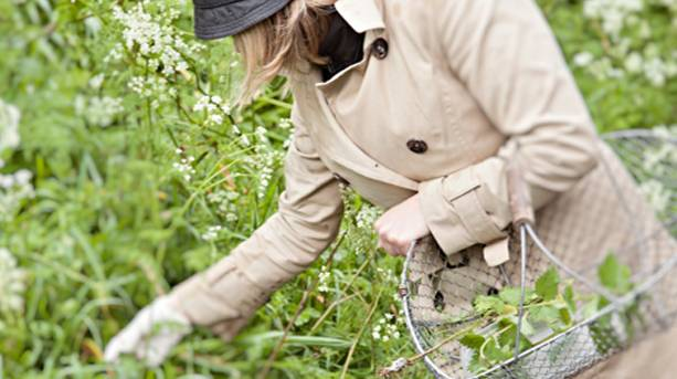Foraging with Vale House Kitchen