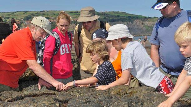 Fossil hunting on Dinosaur coast