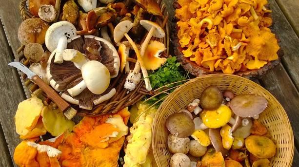 A display of various fungi