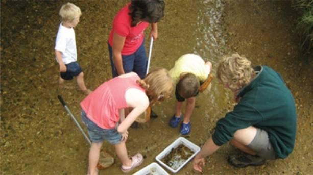 Investigating river wildife