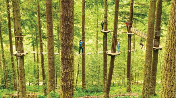 See Dalby Forest from a different perspective with Go Ape