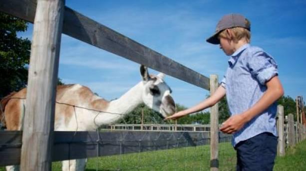 Marsh Farm Animal Adventure Park