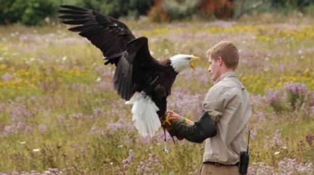 A Keep flying a hawk