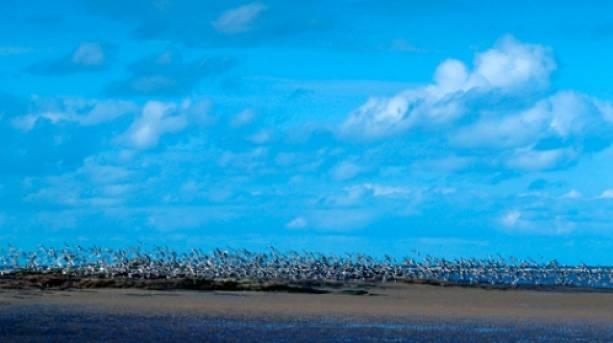 Hilbre Island © VisitBritain