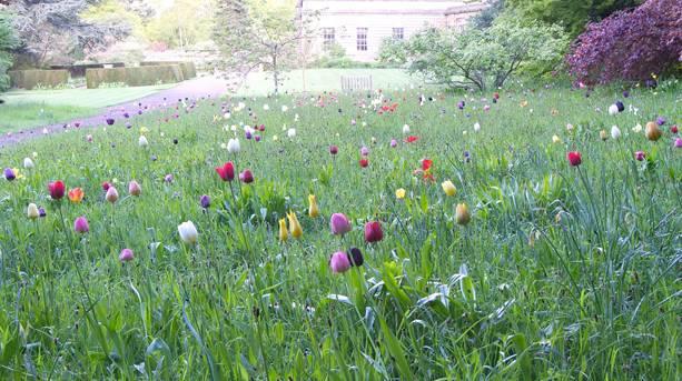 Botticelli Meadow, Howick Hall