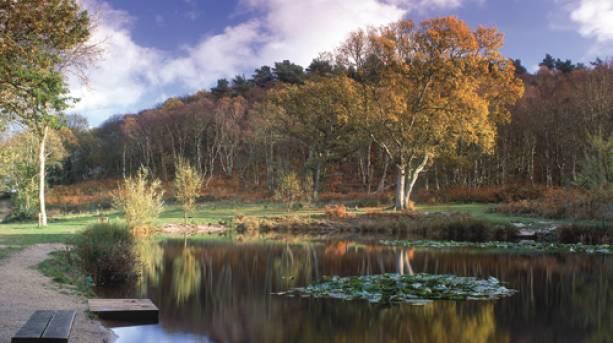 Conservation ponds at Kelling Heath