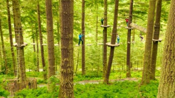 High-flying fun in the trees
