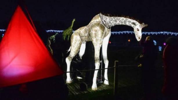 Lanterns at Chester Zoo