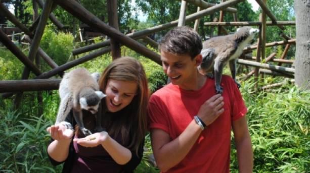 Lemurs at Colchester Zoo