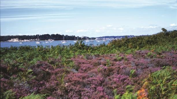 Poole Harbour and Brownsea Island viewed from Studland Heath.