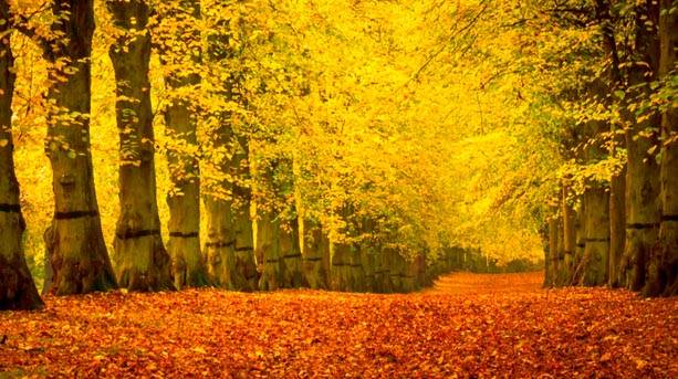 Clumber Park's Lime Tree Alley