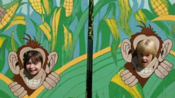 Cheeky monkey faces at Wistow Maze