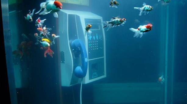 Underwater phone box with fish installation at Lumiere