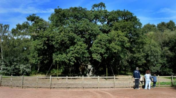 Visitors admire the Major Oak at Sherwood Forest