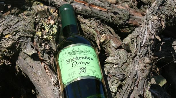 Multi award winning Biddenden Ortega nestled in the vine bark