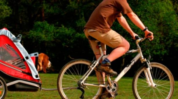 Cycling with your dog in the New Forest