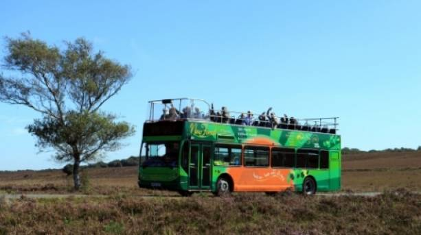 New Forest Tour open top bus