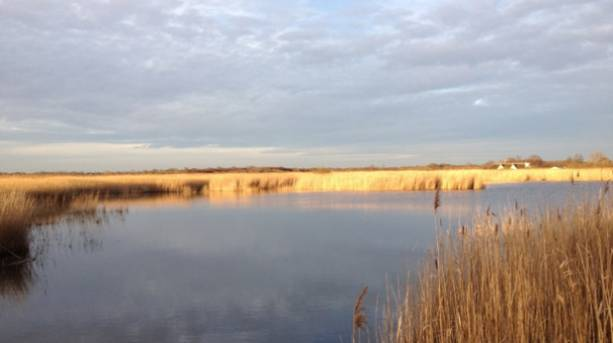 Marshes on the Broads