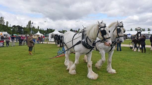 Plough horses