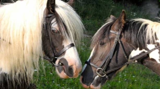 Two ponies