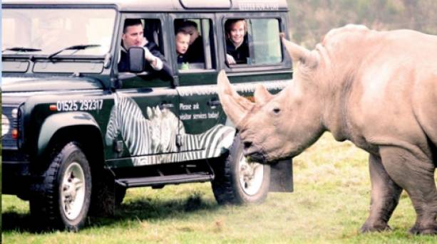 Metting a rhino at Woburn Safari Park