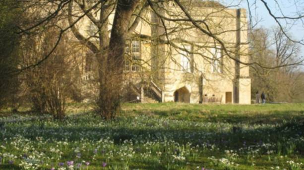 Spring flowers in the Abbey grounds
