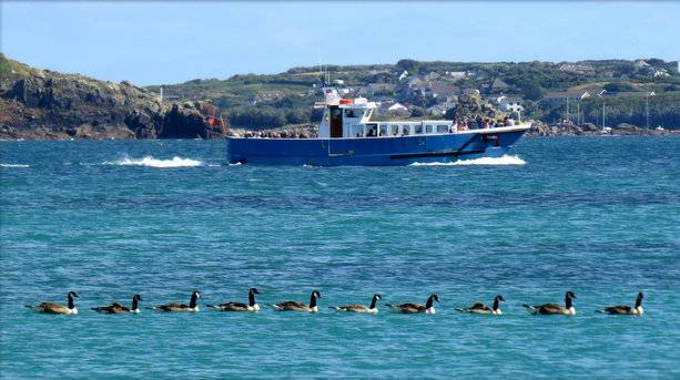 Wildlife from the boats of Scilly