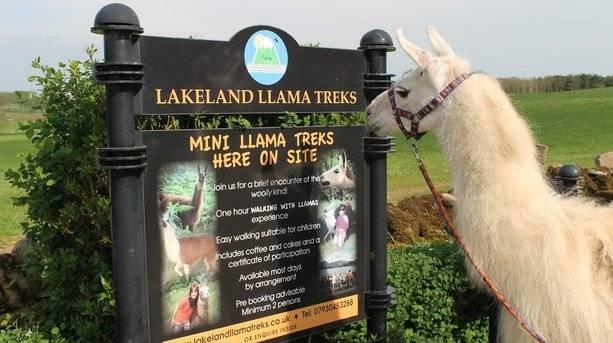 Llama Karma Llama