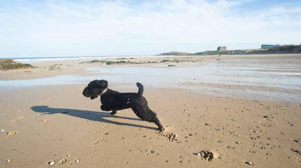 Dog on a Newquay Beach