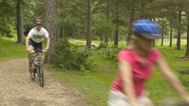 Cyclists in the New Forest