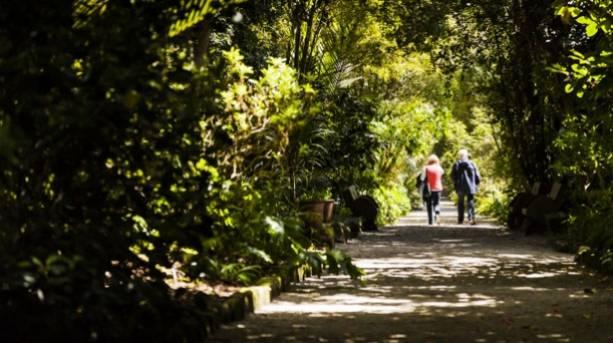 Couple walking down a leafy lane