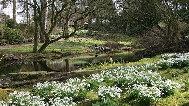 The Snowdrops at Rode Hall Gardens