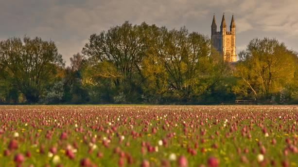 Cricklade meadows