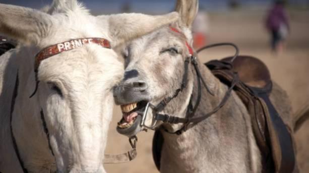 Meet beach donkeys on a seaside holiday in Skegness
